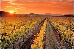 vineyard fall photo (2)